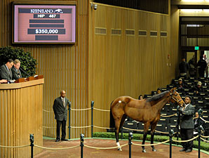Distorted Humor Filly Sells For $350,000