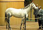 Keeneland Jan. Sale Average Down Less Than 1%