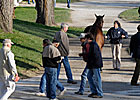 Weanling, Stallion Prospects Lead Session