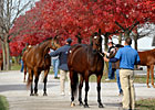 Keeneland's Gross Sales Up Again