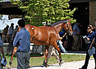 Zero Steroid Positives at Keeneland Sale