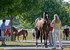 Depressed Keeneland Yearling Market Continues