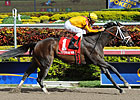 Kauai Katie Romps to Victory in Old Hat
