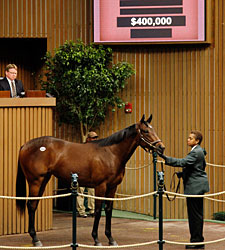 Lemon Drop Kid Filly Tops Early at Keeneland