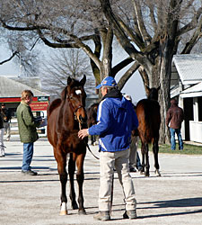 Up, Up, and Away! Keeneland Prices Soar