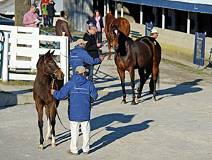 Keeneland January Sale Ends With Major Gains