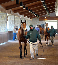 Keeneland January Loses Bit of Momentum