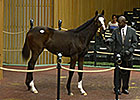 Dell Ridge Lands Galileo Weanling for $475K