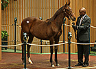 Coolmore Buys War Front Colt for $800K