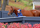 Trappe Shot Weanling Tops Keeneland November