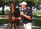 Keeneland September - Hip 61 by War Front