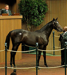 Half to Majestic Warrior Sells for $1 Million