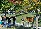 Keeneland Sale Gross Surpasses 2012 Total