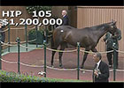 Keeneland September Sale 2014 - Hip 105