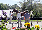 Divine Park Colt Tops Session at Keeneland