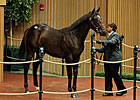 War Front Colt Sells for $1,050,000