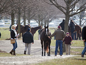 Quick Start at Keeneland January Sale