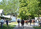 Early Pedigrees to Watch at Keeneland Sale