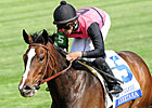 Keertana Should be Tough in Orchid Stakes