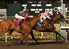 CashCall Futurity, Starlet Nominations Rise