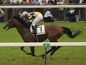 Logi Universe Takes Japan Derby