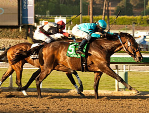 Cal Cup, Sunshine Millions to Combine in 2014