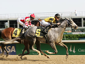 Finley: Macho Again to Try Belmont