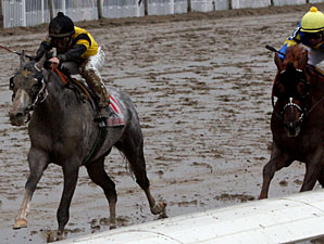Macho Again Runs 'em Down in NO Handicap