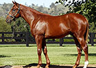 Spendthrift Buys Record-Priced Sepoy Colt