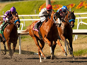 Attention in Best Pal Focused on Baffert Duo