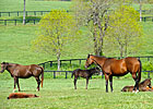 Jockey Club Forecasts Dip in 2014 Foal Crop