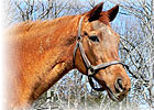 Marshesseaux, Dam of Left Bank, Dies
