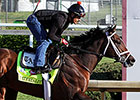 Afleet Alex Aims to Complete Own Triple Crown