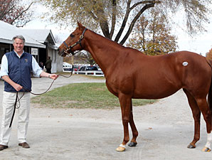 Talkin' Horses to Focus on Breeding, Sales