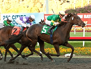 Midnight Lute Gets His First Stakes Winner