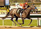Midnight Hawk Brings Illinois Derby Intrigue