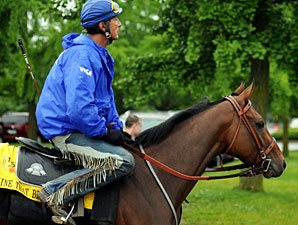 Mine That Bird Works, Uncertain For Travers