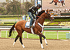Mucho Macho Man Struts for Santa Anita Fans