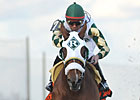 Mucho Macho Man Readies for Holy Bull