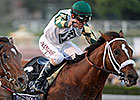 Mucho Macho Man Retired, to Stand at Adena