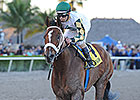 Mucho Macho Man Florida's Horse of the Year