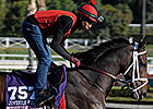 Grade I Winner My Conquestadory Retired