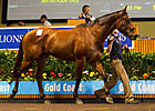 Patinack Sparks 'Epic' Day at Magic Millions