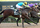 Derby Contender Nehro Breezes at Churchill