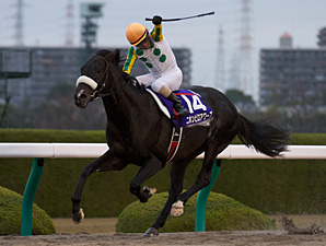 Nihonpiro Ours Easy Winner of Japan Cup Dirt