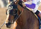 Combacker Notional Makes Turf Debut