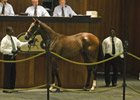 Medaglia d'Oro Filly Tops OBS Select Session
