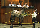 Macho Uno Colt Tops OBSC Sale at $825,000