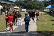 Mood  Cautious at OBS August Yearling Sale, But Prices Could  Be Solid