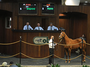 OBS Winter Mixed Sale Off to Steady Start